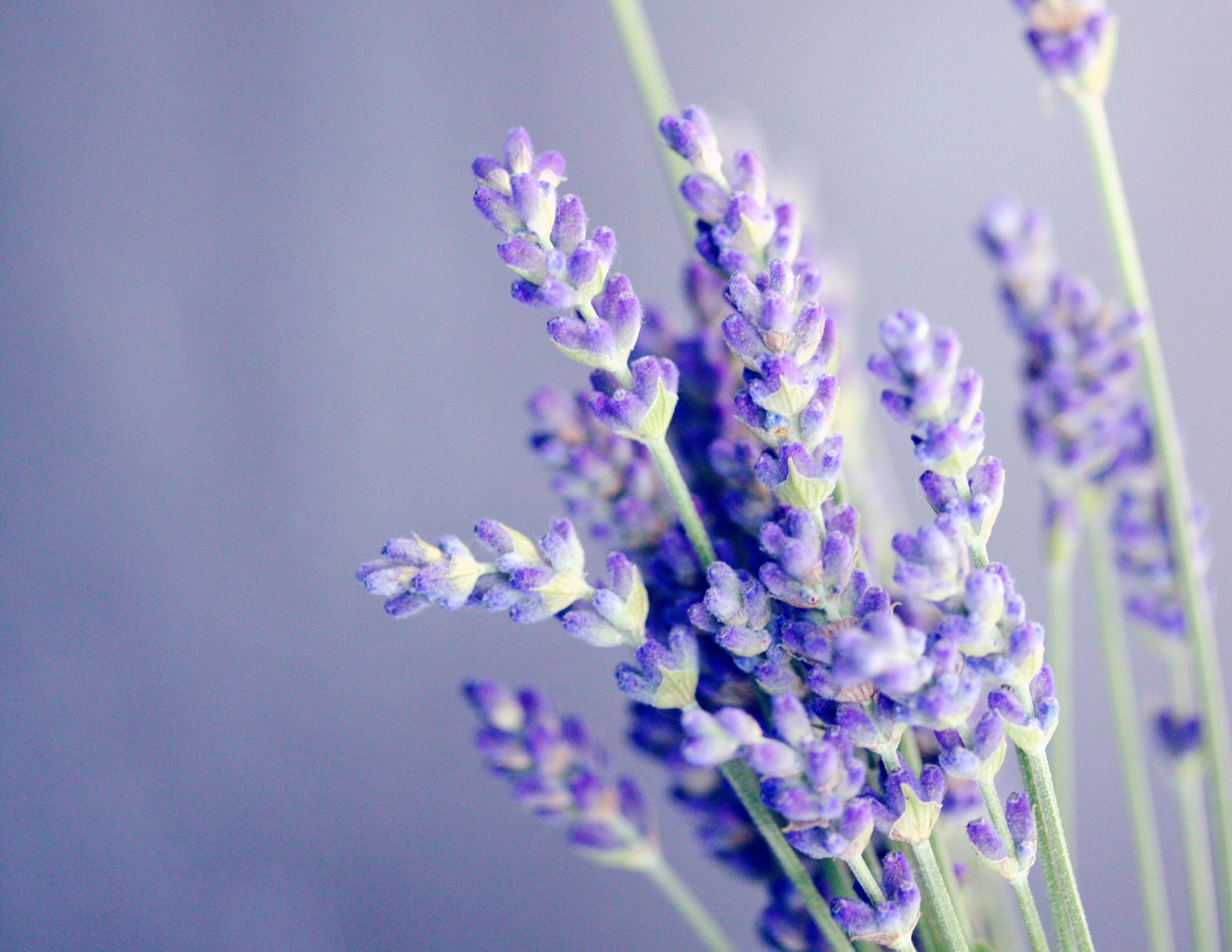 SMELLED ofLavender and Sunny Dunes